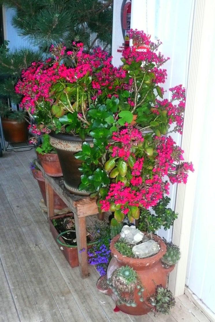 Michael flower pots