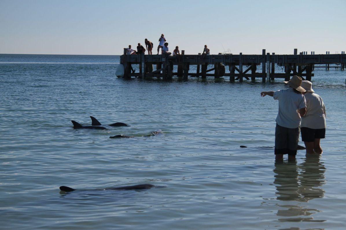 delfin02