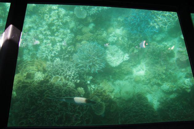 snorkeling02
