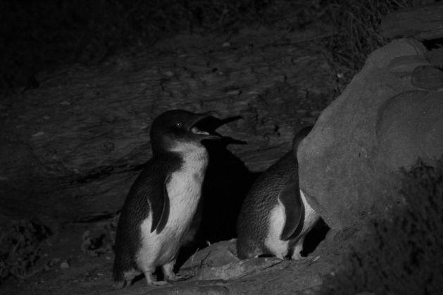 penguin03