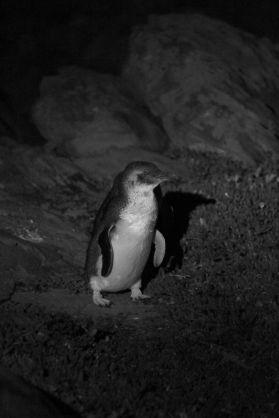 penguin04