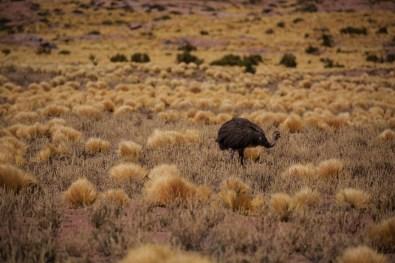 Etwas Emu-artiges :-)