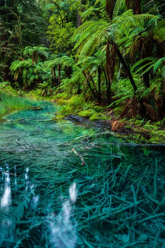 Quelle in den Redwoods