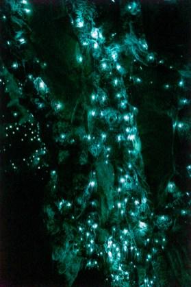 Waipu Cave Glow Worms