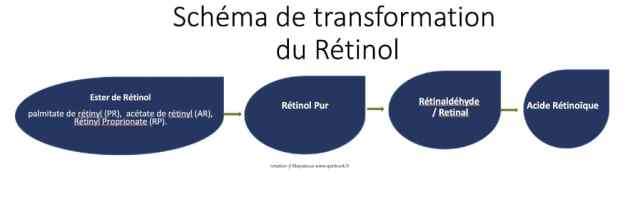 schema retinol peau transformation acide retinoique