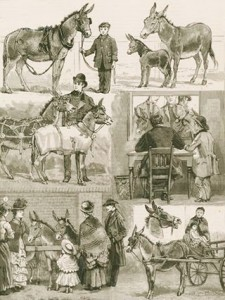 Costermongers' Jubilee Pony and Donkey Show at the People's Palace East London, Author's Collection