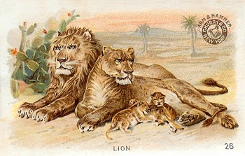 Lion, Lioness, and Cubs, Author's Collection