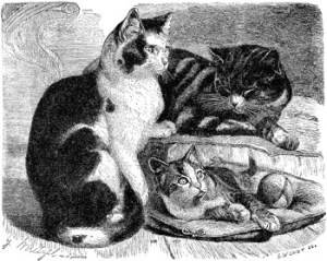 Interesting Animal Tales of France