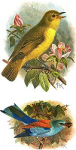 Common Warbler (top) Roller (bottom), Author's Collection