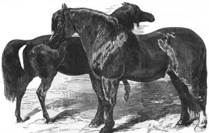 Horse Friends, Public Domain