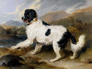 Newfoundland Dog Duel
