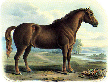 work horses - 7-year-old Suffolk Punch in mid 1800s