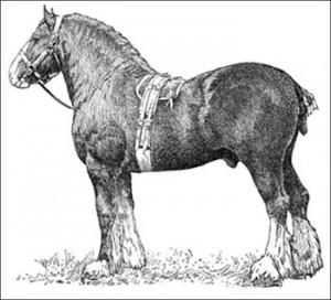 Clydesdale, Public Domain