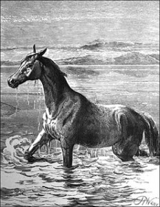A Swimming Horse and Richard Hoodless