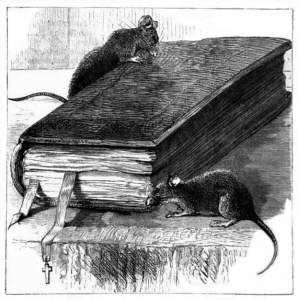Wigs - church mice