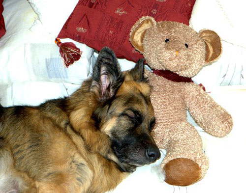 big dog sofa bed flexsteel sofas online fantastic photos of german shepherd dogs