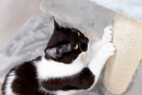 How to Prevent Cats from Scratching Furniture | Stop ...