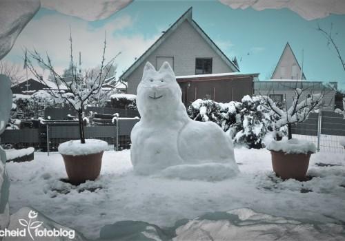 Schneekatze