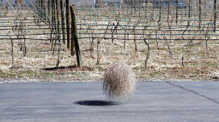 Canon EOS 1D MarkII — 70mm ISO 100 @ f/5.6 and 1/500 sec — My first encounter with a tumbleweed.