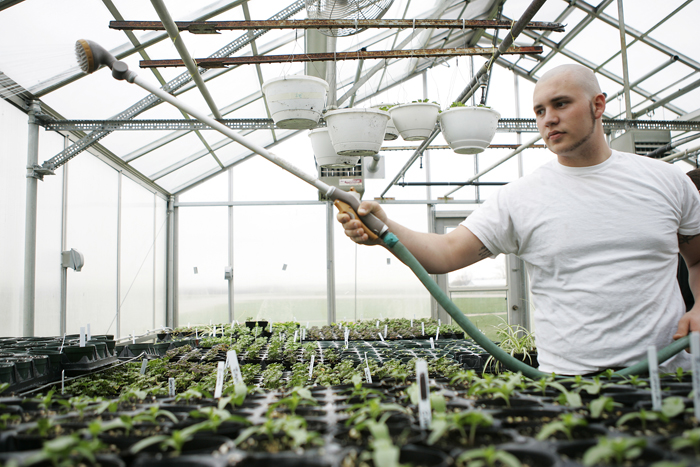 Zach Henderson, junior at Tri High, waters various plants in Tri's greenhouse Wednesday afternoon during Dan Webb's horticulture class. (C-T photo Max Gersh)