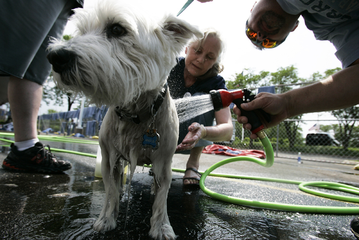 MAX GERSH | ROCKFORD REGISTER STAR Angus, a 13-year-old West Highland White Terrier, stands still while Julie Henry and Ray Fuller rinse him off Saturday, June 4, during a charity dog wash at Lou Bachrodt Auto Mall in Cherry Valley. Proceeds from the event benefit Noah's Ark Animal Sanctuary, PAWS Humane Society and Rockford Career College Vet Tech Program. ©2011