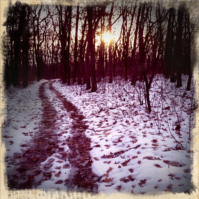 A trail at Devil's Lake State Park in Wisconsin. Shot using Retro Camera on a Droid Incredible. ©2011 Max Gersh