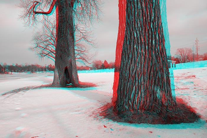 Trees along the Sinnissippi Bike Path. ©2014 Max Gersh
