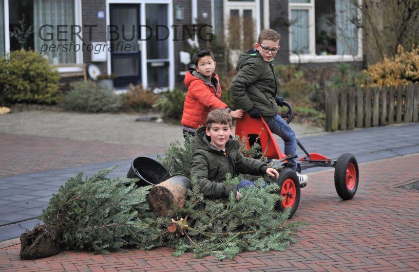 Inzamelen kerstbomen in gemeente Renkum