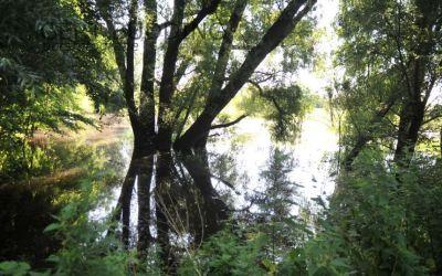 Hoge waterstand de Rijn en Jufferswaard trekt veel belangstellenden