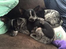 Blue, Squirt, Daisy and Priscilla are doing great 01.15.2015