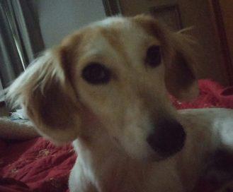 Charlie (Snoopy) 09.25.2014