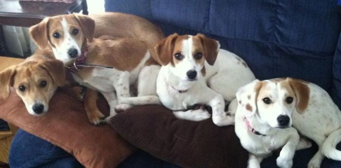 Daisy, Mischief, Mars, and Nova are all happy and healthy in their new homes 04.09.2014