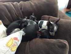 From left to right Blue, Squirt, Daisy and Priscilla 03.09.2015