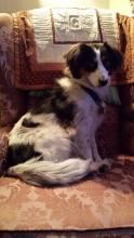Jewel 2 one year after adoption taken 03.28.2015