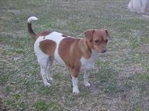Molly AKA Grumpy-Dog-2-1