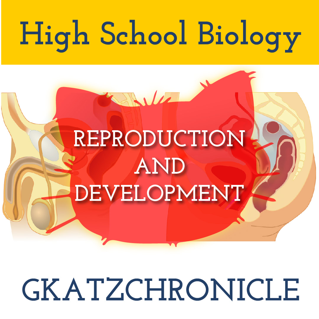 Reproductive System Matching Amp Diagrams
