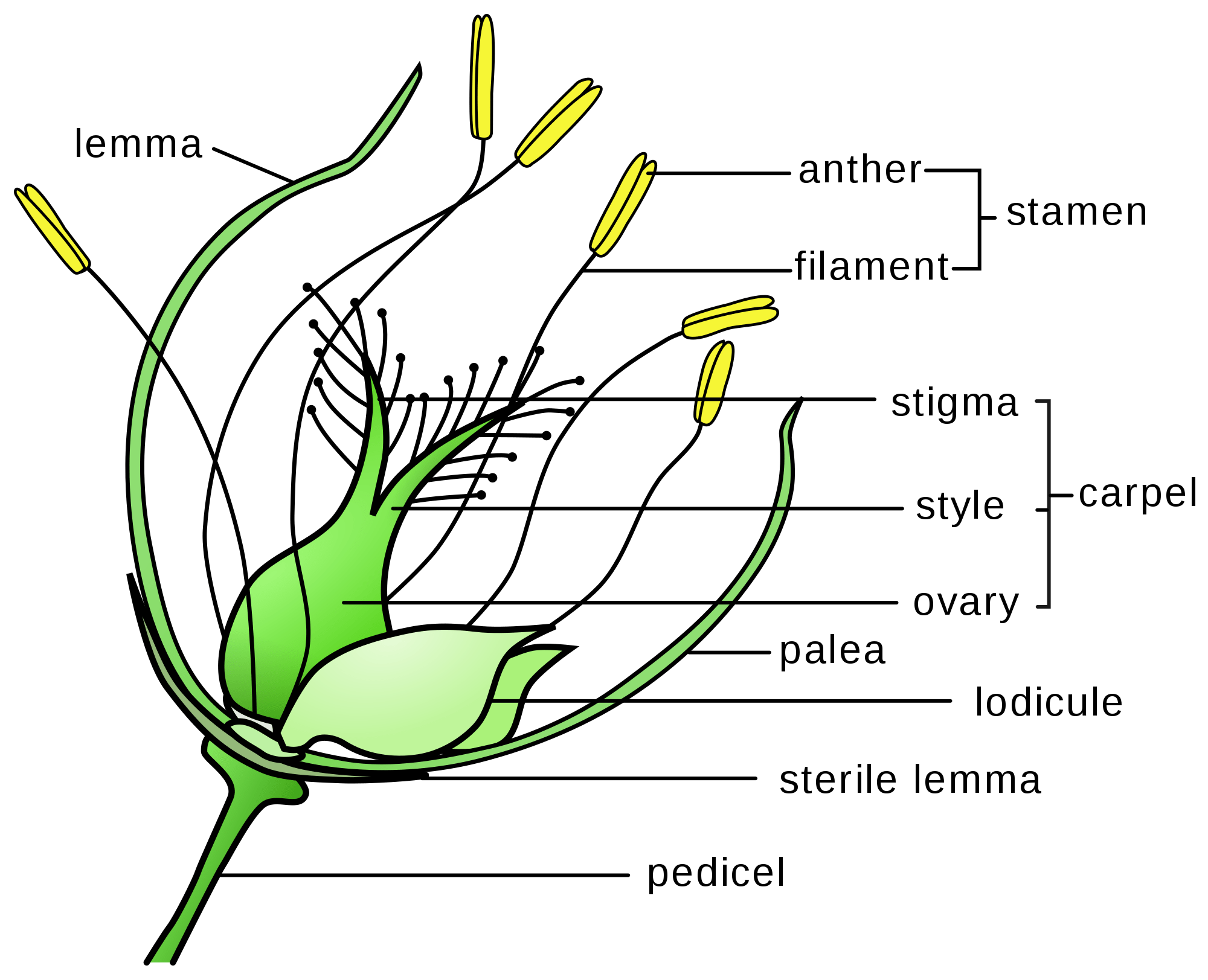Plant Reproduction Worksheet