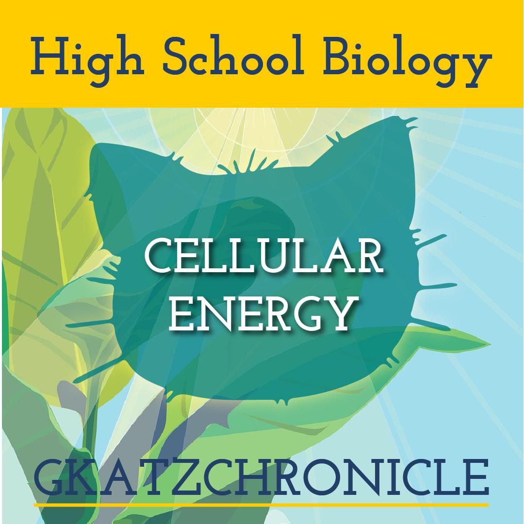 Core Biology Plant Sciences Video Worksheet