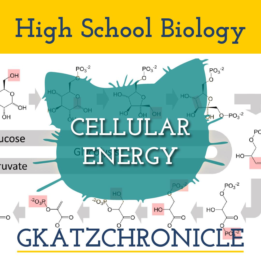 Cellular Respiration Bill Nye Video Worksheet