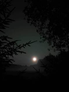 Naktis sodyboje
