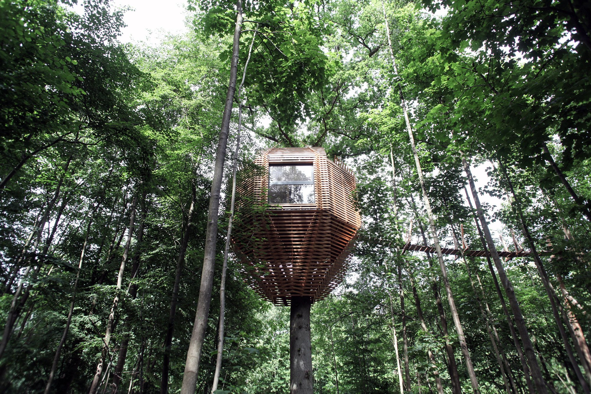 Origin Tree House