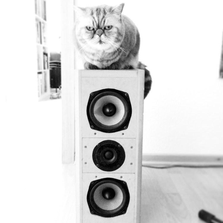 Katze auf Box