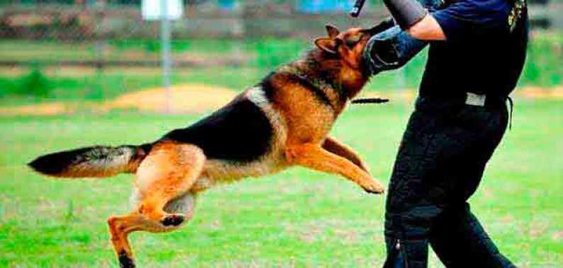 Cão de Guarda Segurança Privada