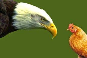 el-guila-y-los-dos-gallos