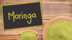 Moringa - Wunderbaum