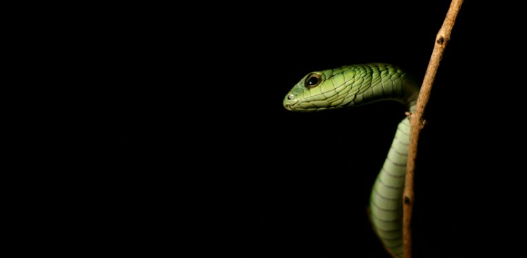 Boomslang by night by David Steyn, Stellenbosch