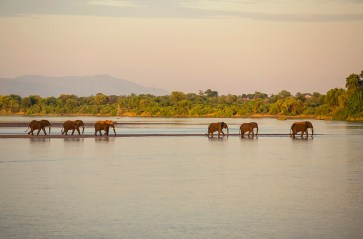 I was on a tiger fishing trip in the Chirundu area, Zimbabwe. These elephant had been feeding and playing in the river the whole day. I noticed them eventually heading back to the mainland. I grabbed my camera and captured images of them crossing the Zambezi back to land. - By Dominic Barnardt Canon 5D Mark III, Canon 70-200 f/2.8, ISO 250, f/4, 1/800 sec