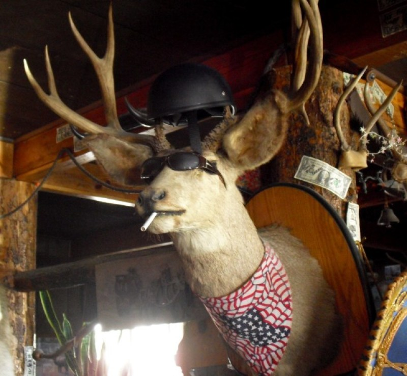 Stuffed and mounted elk with cigarette in mouth - Major's Place, Nevada
