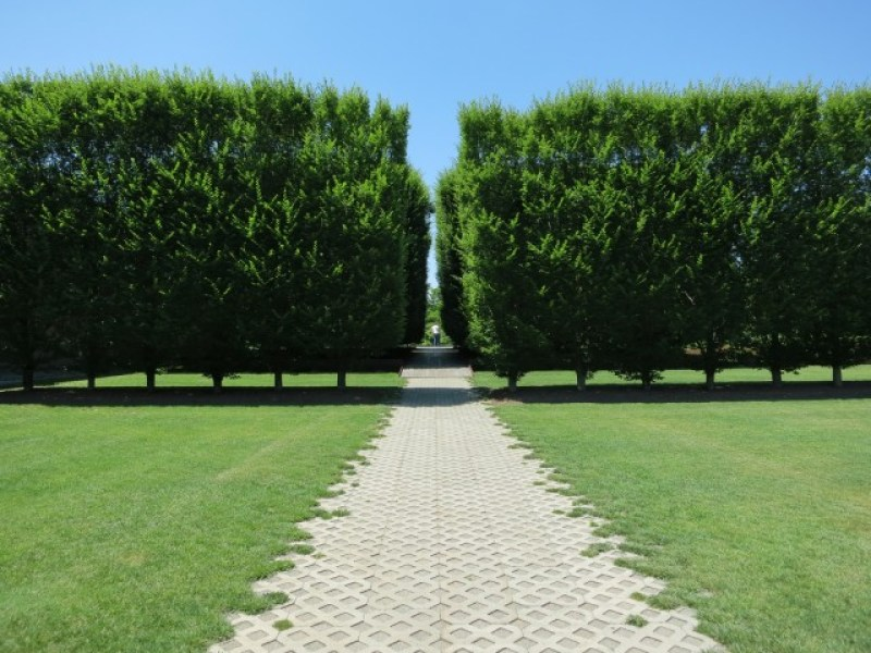 Symmetrical grove of trees outside contemporary art museum in Beacon NY