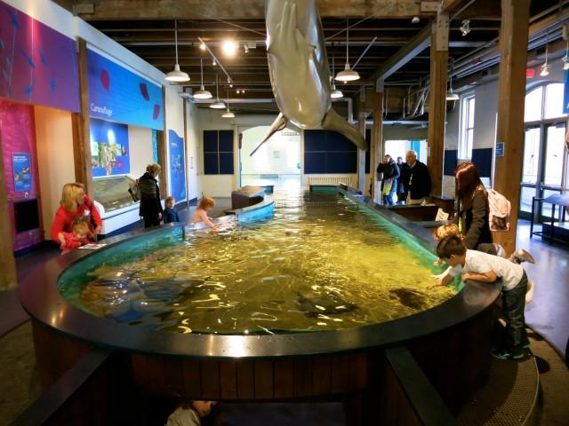 Sea Ray and Shark Touch Tank, Maritime Aquarium at Norwalk CT